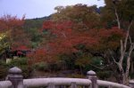 Autumn leaves at Yasaka Shrine