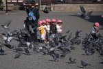 At Higashi Hongan-ji. Only one of these kids seems to like pigeons.
